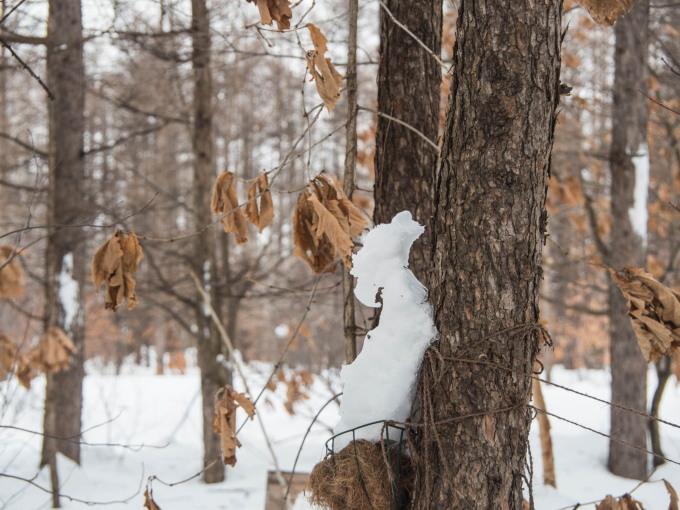 """カンタベリーの「雪まつり」?メイン雪像は""""りすのしっぽ""""?_f0276498_20420081.jpg"""