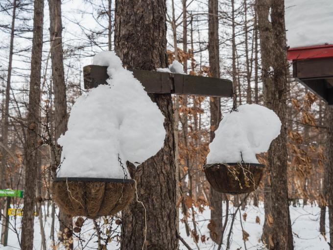 """カンタベリーの「雪まつり」?メイン雪像は""""りすのしっぽ""""?_f0276498_20422524.jpg"""