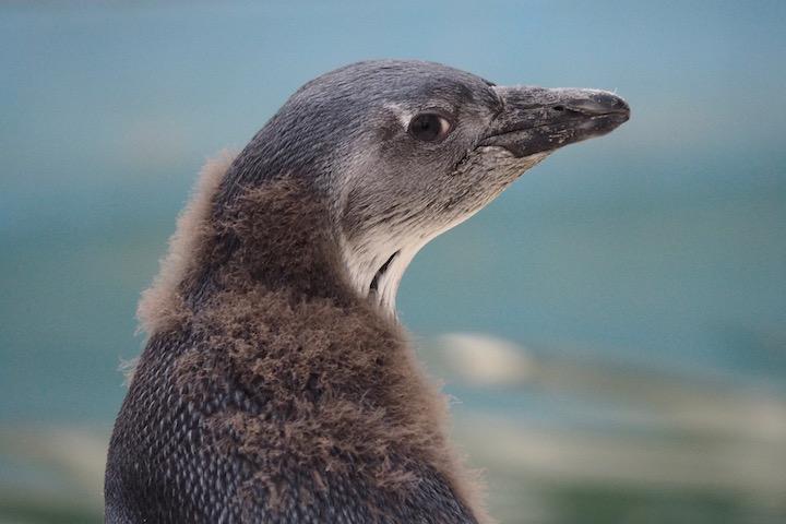 またペンギンさん頼み_b0016600_203824.jpg