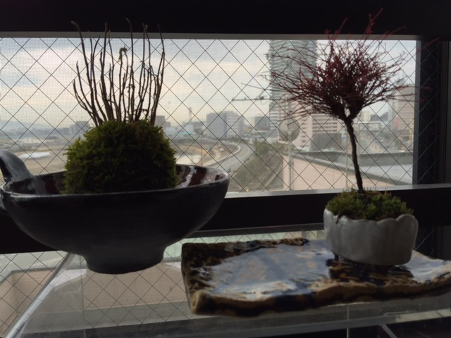 春の植木市_a0156611_1023098.jpg