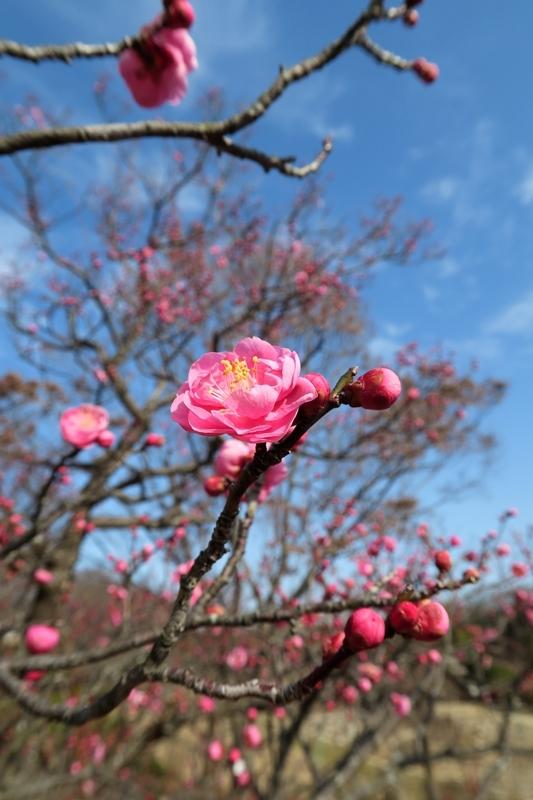 春が来る_e0364223_14264263.jpg