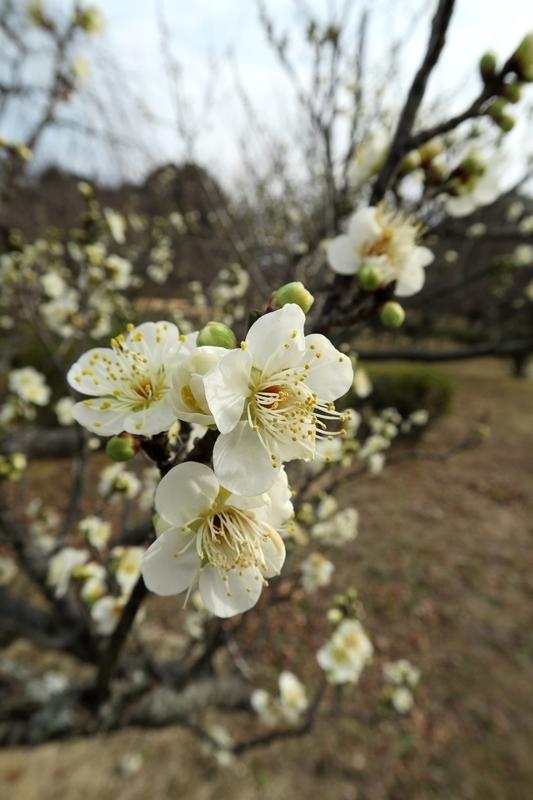 春が来る_e0364223_14271352.jpg