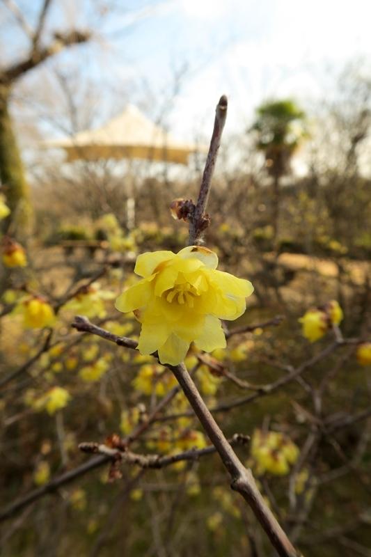 春が来る_e0364223_14274576.jpg