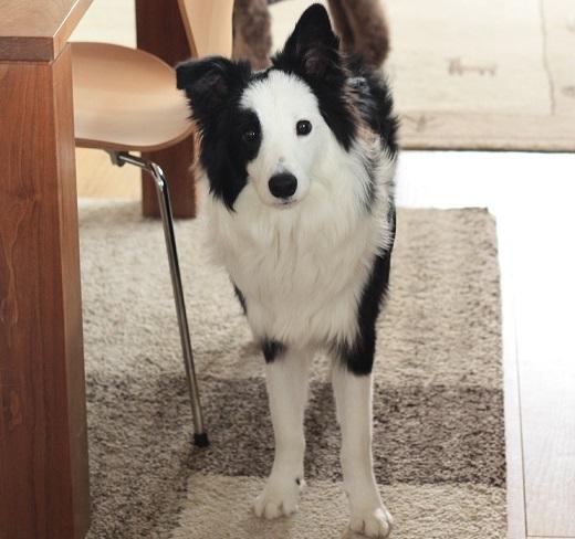 犬と暮らすために_b0174042_17160156.jpg