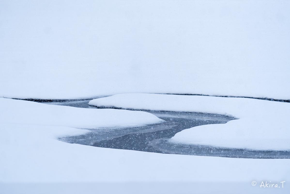 雪の広沢池 -2-_f0152550_22221901.jpg