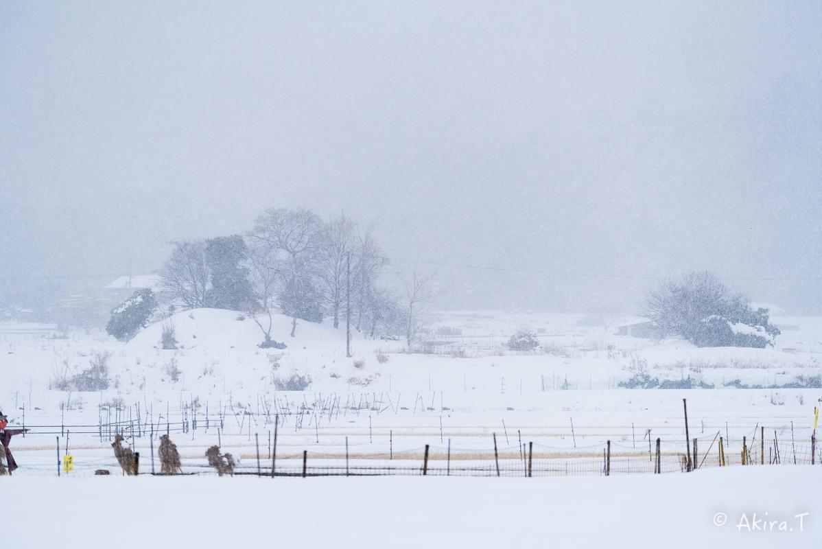 雪の広沢池 -2-_f0152550_22223486.jpg