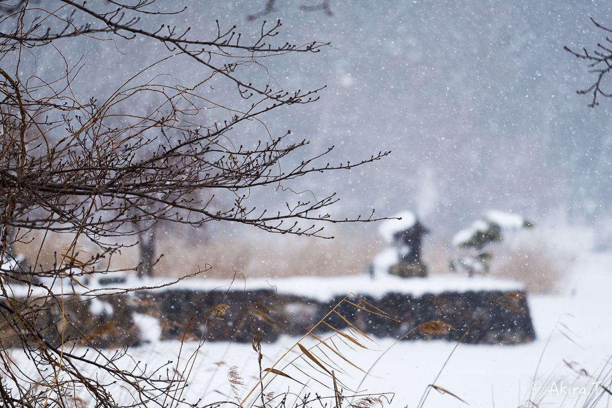雪の広沢池 -2-_f0152550_22224478.jpg