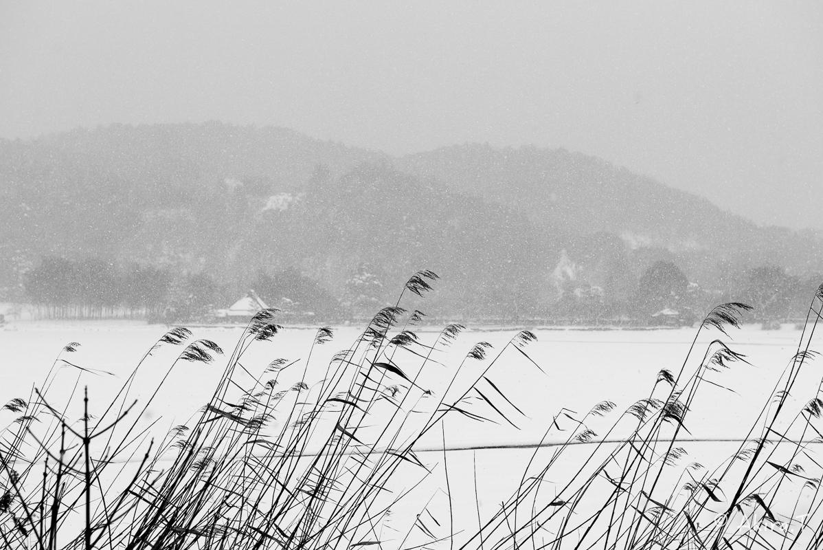 雪の広沢池 -2-_f0152550_22230325.jpg