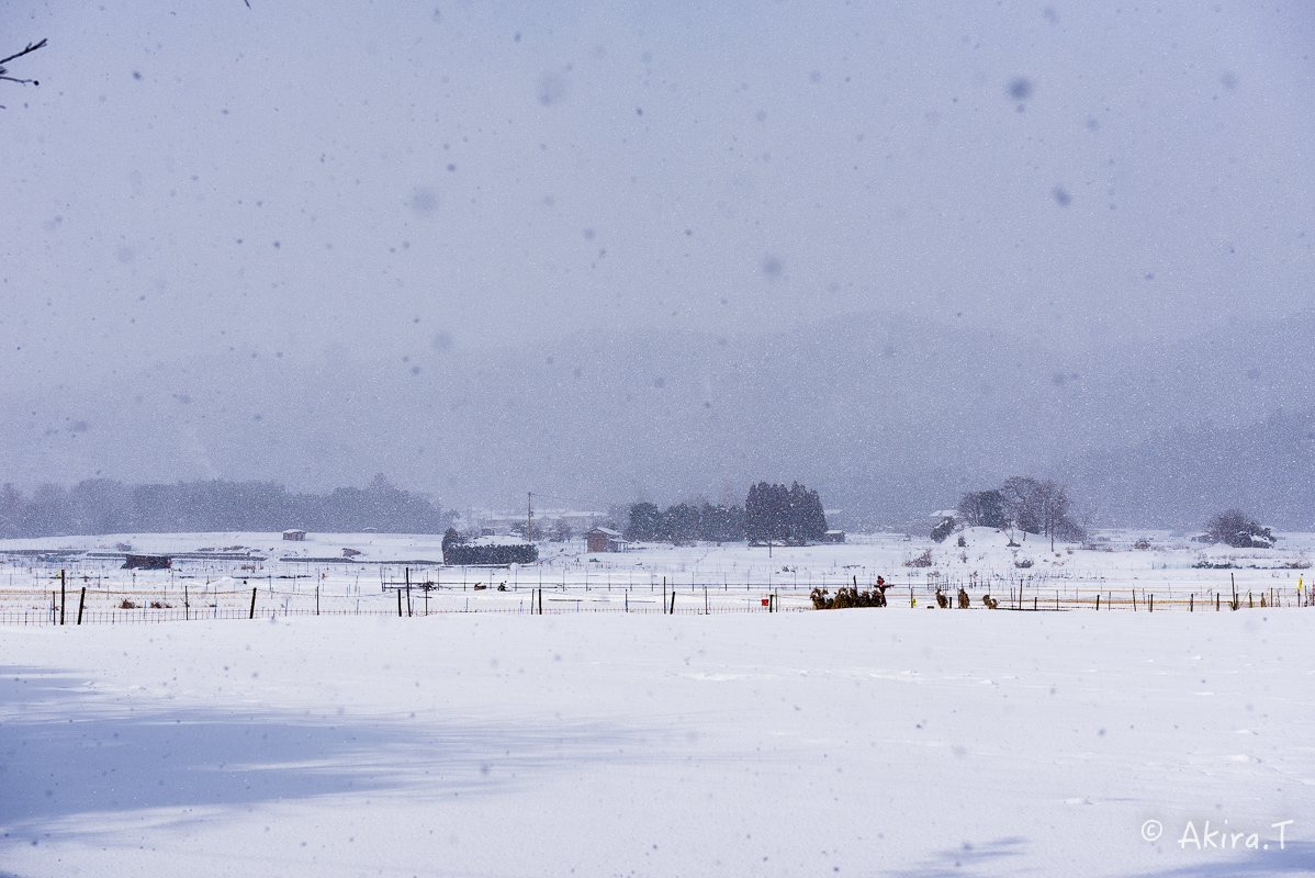 雪の広沢池 -2-_f0152550_22231185.jpg