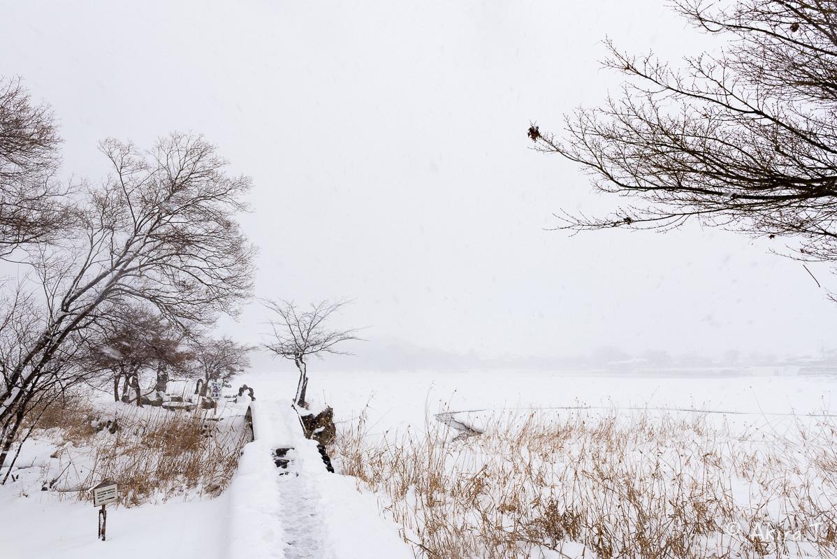 雪の広沢池 -2-_f0152550_22244083.jpg