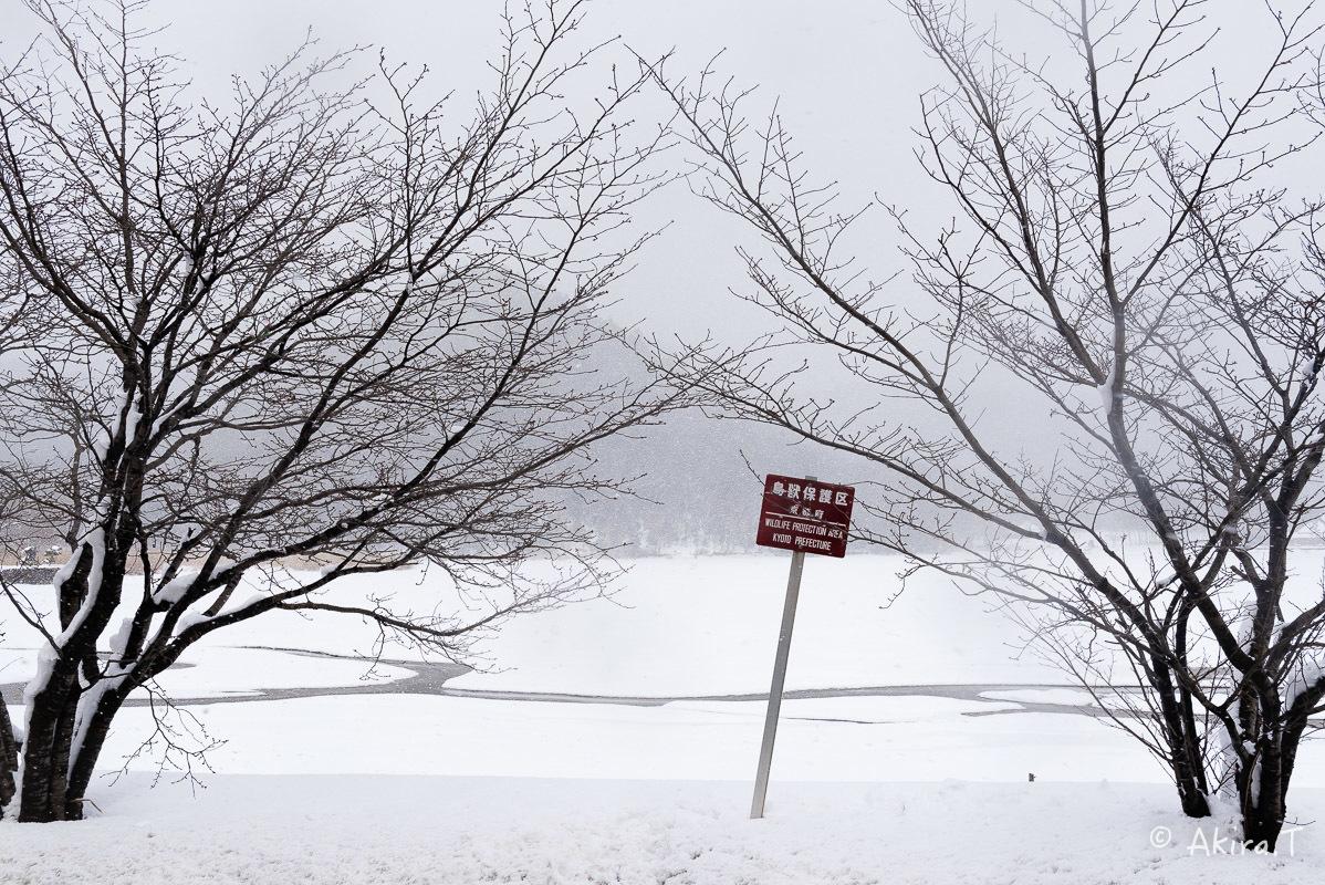 雪の広沢池 -2-_f0152550_22262090.jpg
