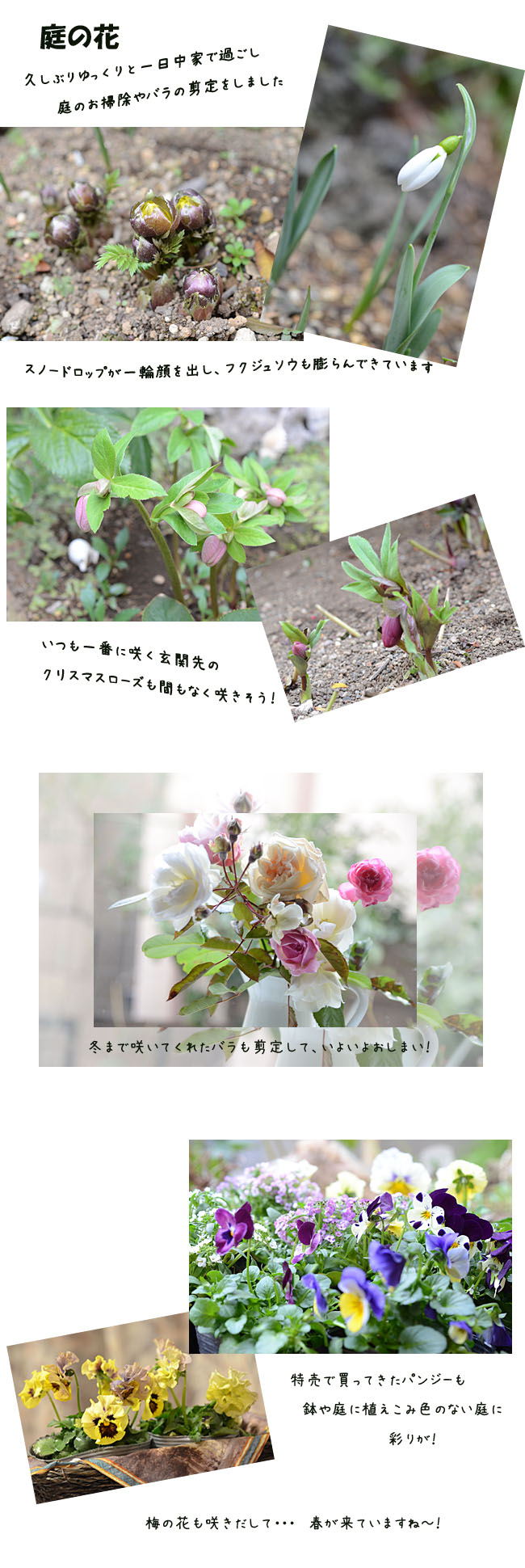 e0020954_158158.jpg