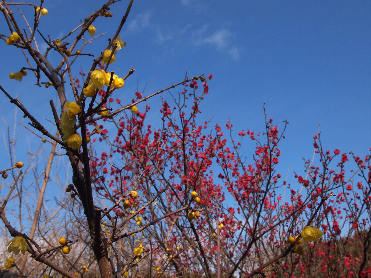梅の花・・・_b0021375_18585334.jpg