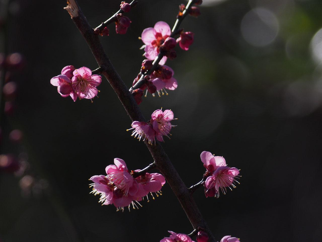 梅の花・・・_b0021375_18594623.jpg