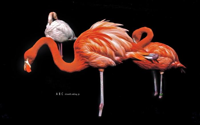 flamingo つづき(写真部門)_f0315034_12091981.jpg