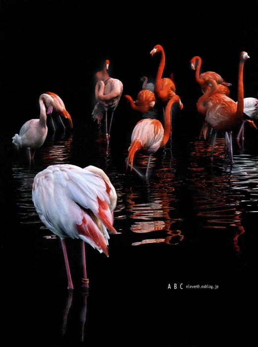 flamingo つづき(写真部門)_f0315034_12140316.jpg