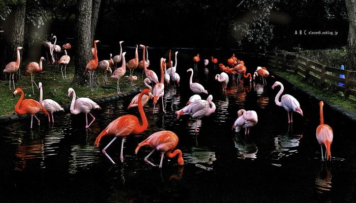 flamingo つづき(写真部門)_f0315034_12303221.jpg
