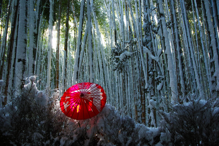京都    1/15 嵯峨野 竹林の小径_f0021869_19410454.jpg