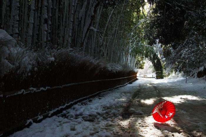 京都    1/15 嵯峨野 竹林の小径_f0021869_19414689.jpg