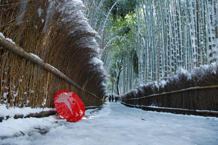 京都    1/15 嵯峨野 竹林の小径_f0021869_19433429.jpg