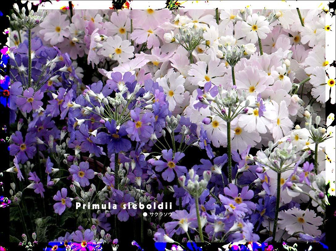 f0198771_00010731.jpg