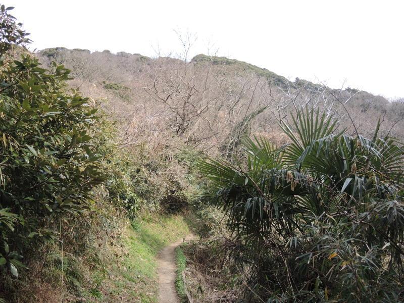 大楠山241.1mに行きました_e0232277_11551277.jpg