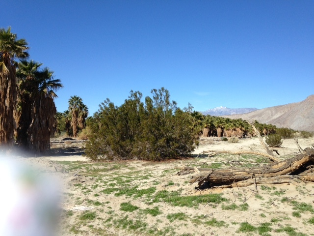 砂漠でサイクリング_a0331910_12145715.jpg