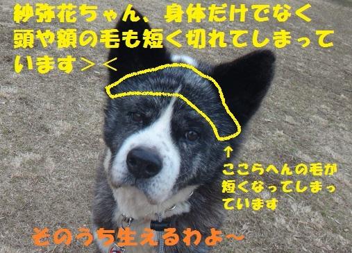 f0121712_23264074.jpg