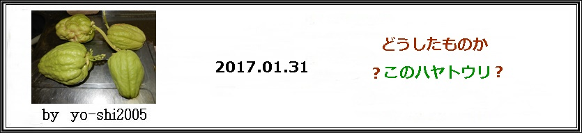 e0033229_1825262.jpg