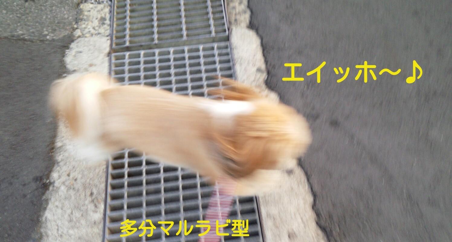 b0306158_19375873.jpg