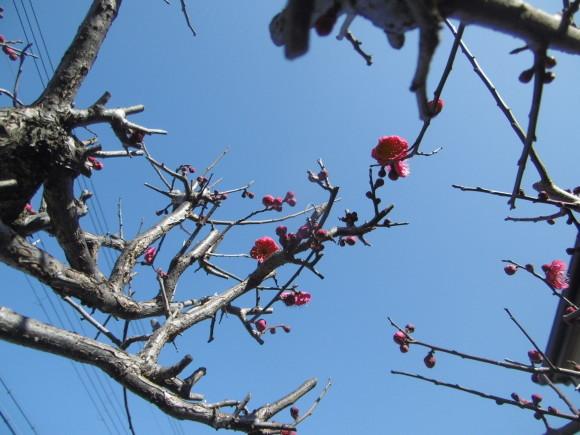 小さい春見つけた。_f0205367_16483533.jpg