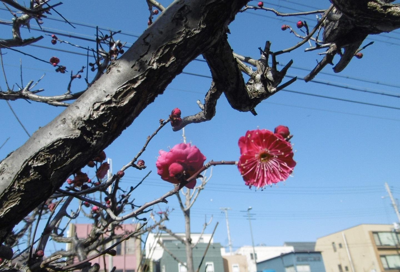 小さい春見つけた。_f0205367_16535504.jpg