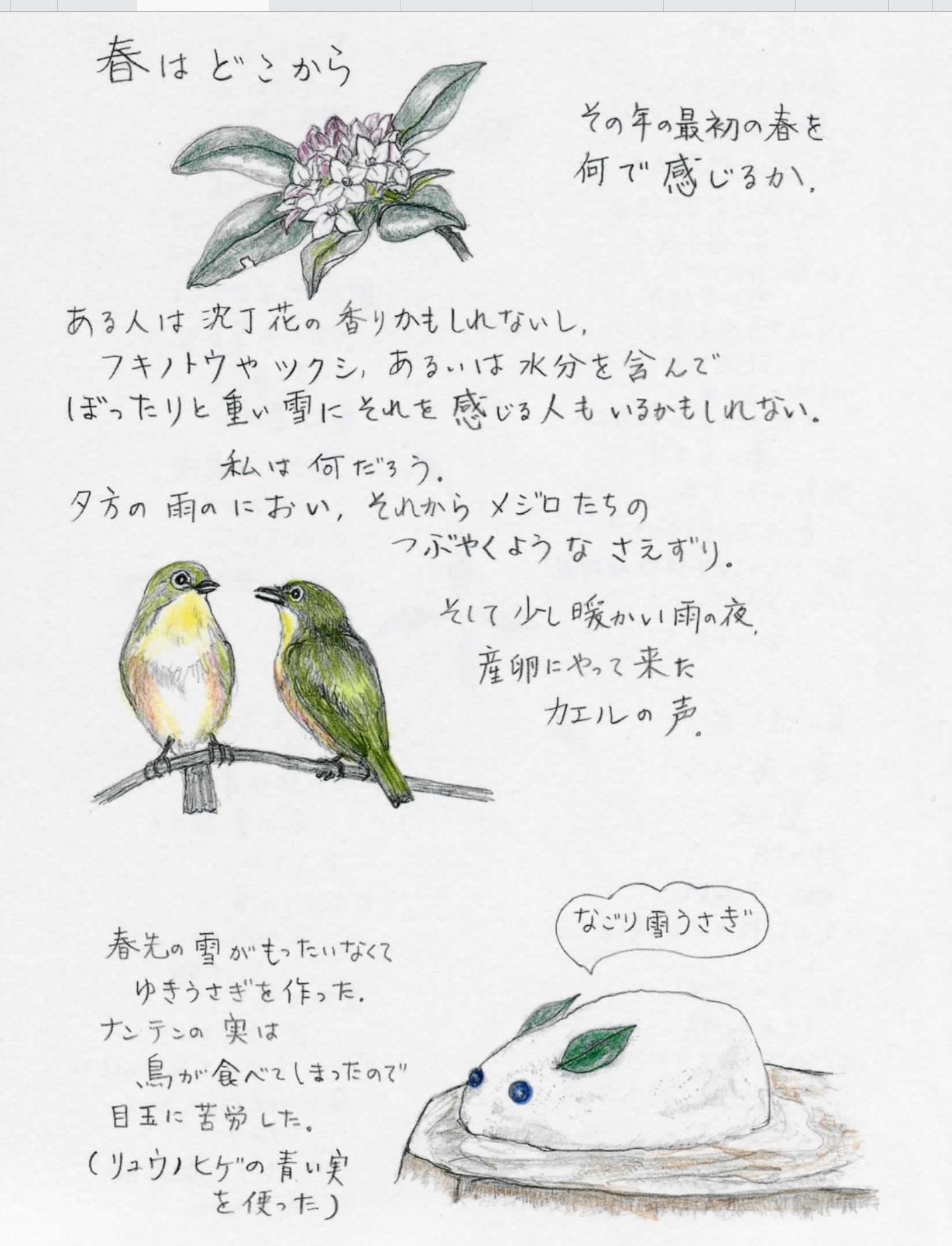 春はどこから……アナーセンの春は、育種ビオラ展から始まります…_b0137969_06174290.png