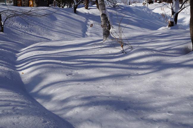 雪景色_d0162994_15444153.jpg