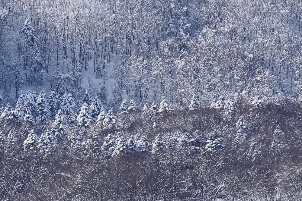 雪景色_d0162994_15520395.jpg