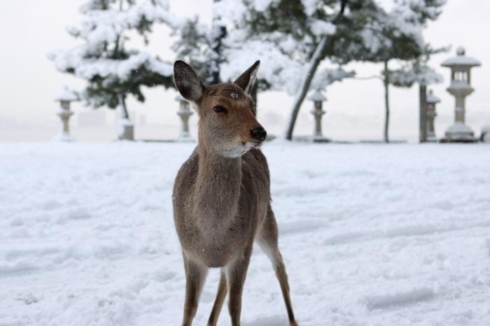 雪の宮島 広島旅行 - 11 -_f0348831_22560211.jpg