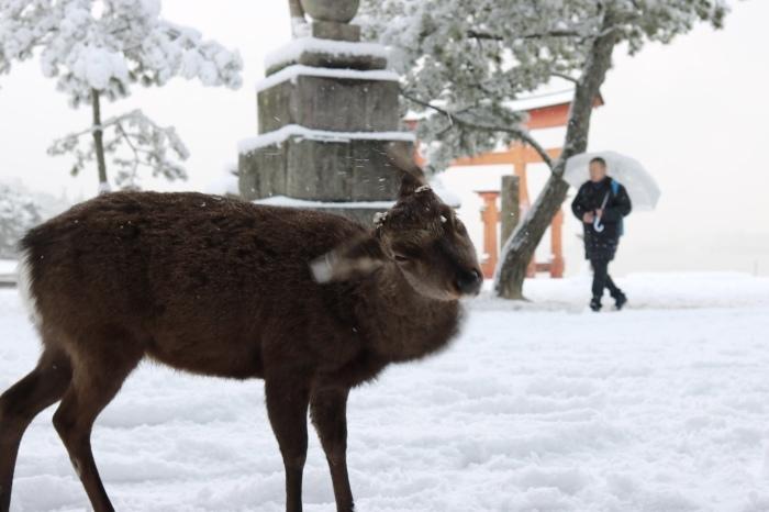 雪の宮島 広島旅行 - 11 -_f0348831_22561978.jpg
