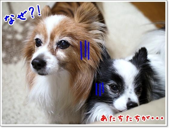 d0013149_00185126.jpg