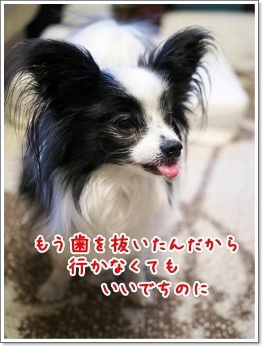 d0013149_00544431.jpg