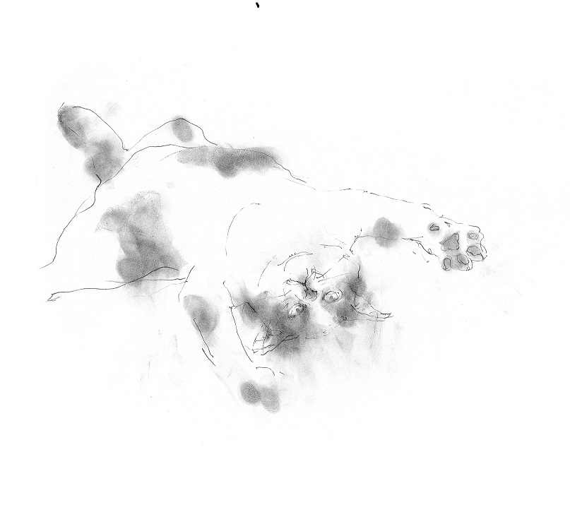《【アーカイブス 59 】『ヤマセミの渓から ――― ある谷の記憶と追想 》_e0143870_17414233.jpg