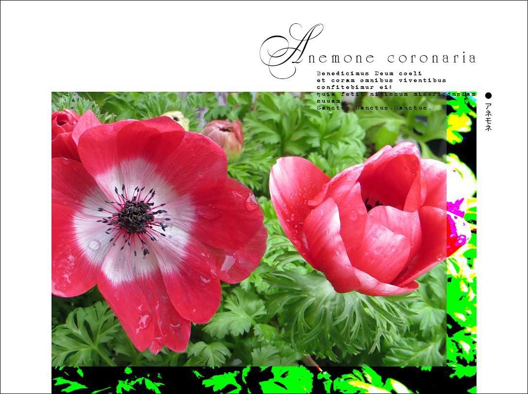 f0198771_23540111.jpg