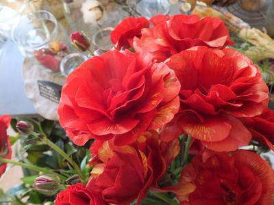 オークリーフ(三宅さんの球根切り花)_f0049672_14144599.jpg