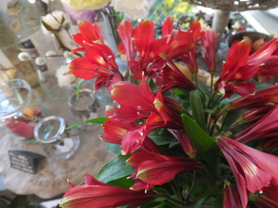 オークリーフ(三宅さんの球根切り花)_f0049672_1415156.jpg