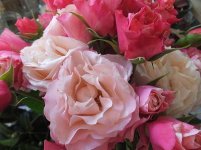 オークリーフ(三宅さんの球根切り花)_f0049672_14152913.jpg