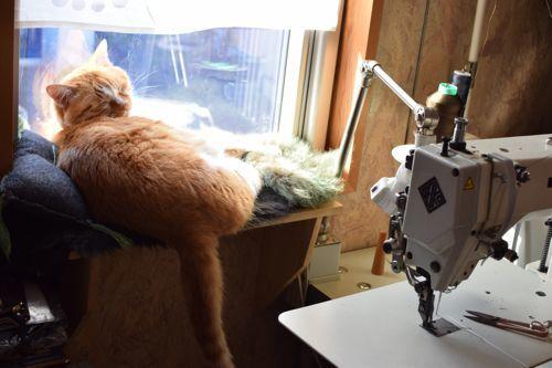 一匹一猫棚_c0185674_23235232.jpg