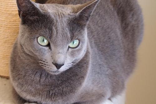 最近の愛猫ククリ_a0240026_13553529.jpg