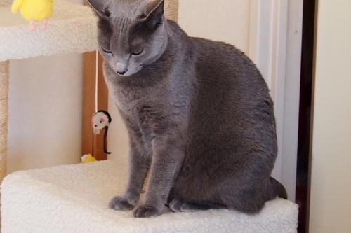 最近の愛猫ククリ_a0240026_13561968.jpg