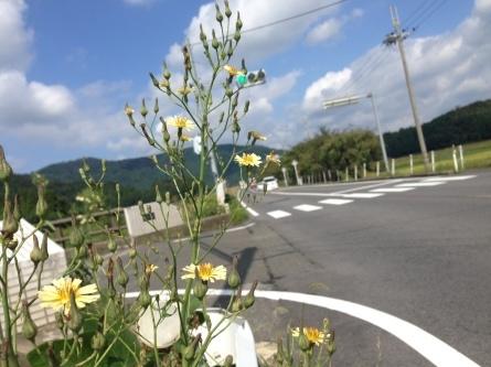 【チャリ】琵琶湖をサイクリングしてみる?【長浜スタート】_a0293131_23191716.jpg