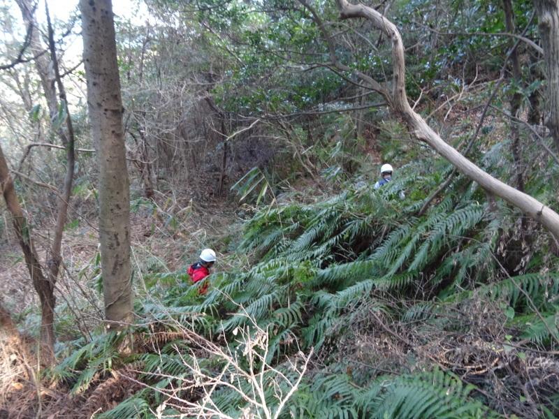 木の枝でお雛さま作り・・・うみべの森_c0108460_20540863.jpg