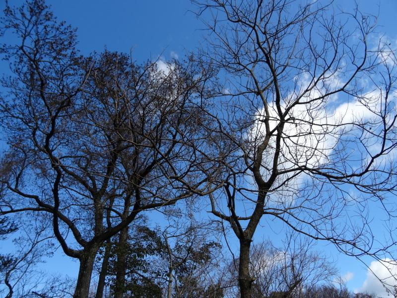 木の枝でお雛さま作り・・・うみべの森_c0108460_20584903.jpg